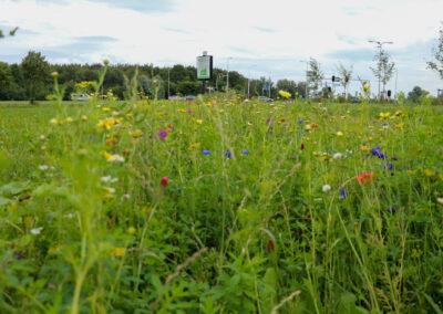 Biodiversiteit op LAB met bloemenranden en insectenteller